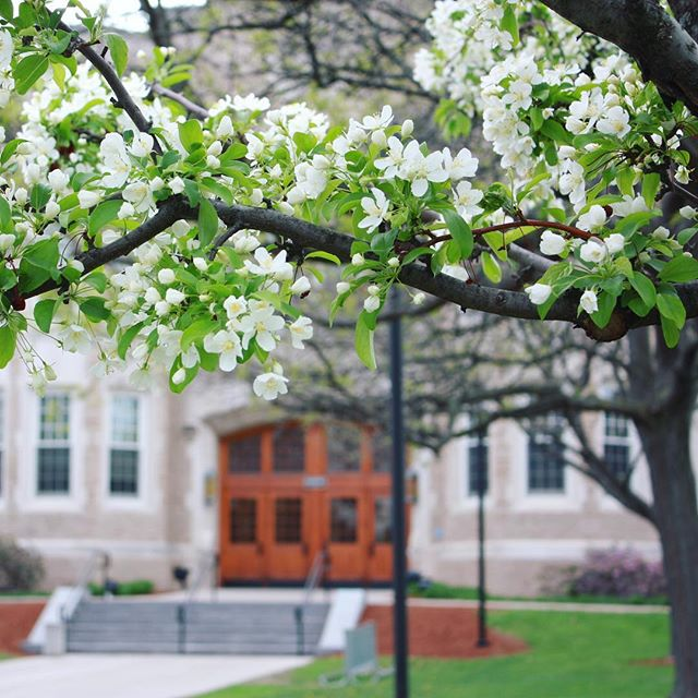 Cherry Blossoms in foreground, Hawkins Hall entrance in background