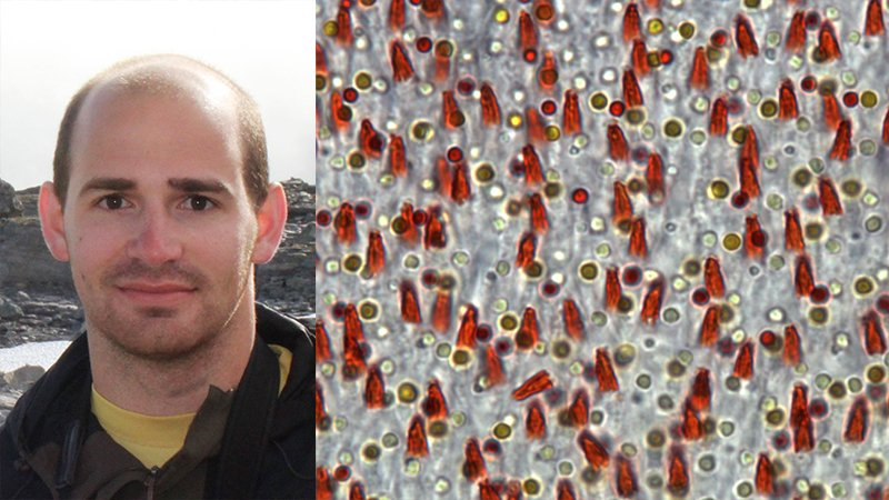 Portrait of Dr. Luke Tyrrell and an image of the flycatcher's retina