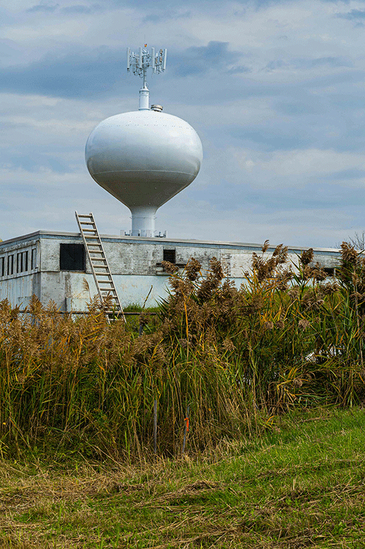 Photo of a water tower with some overgrowth in the foreground.