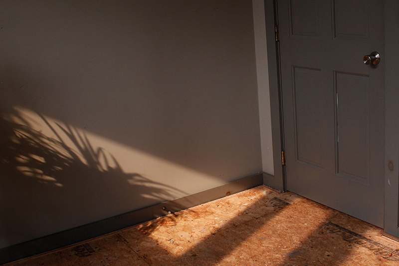 Photo of a wall with a bit of orange natural light on it, and the shadow of a plant.