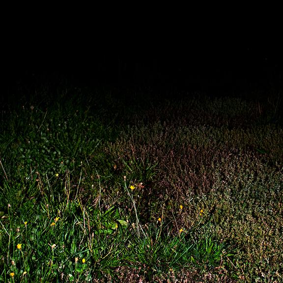 A grassy field at night.