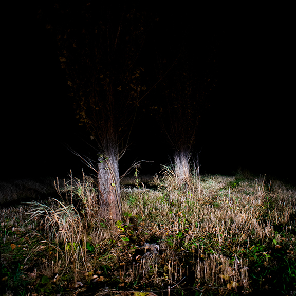 Lower part of a tree in a grassy field at night.