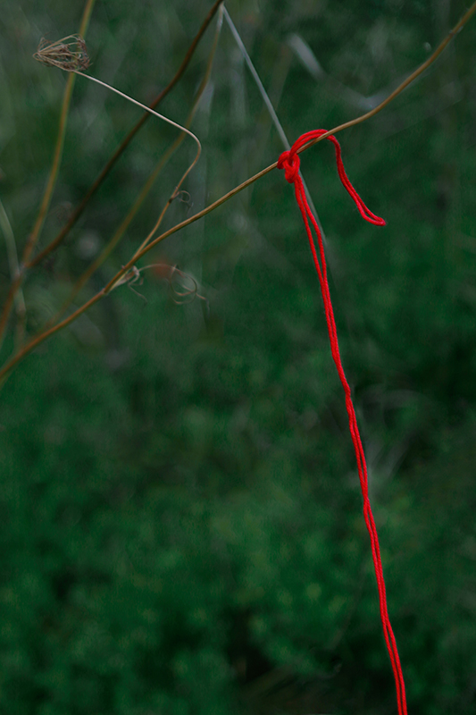 Photo of a red string tied to a tree branch.
