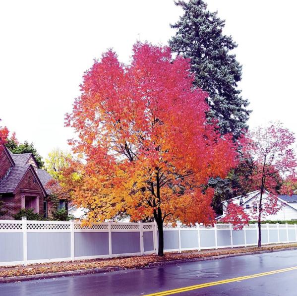 Photo of Fall leaves by badbawool_lim