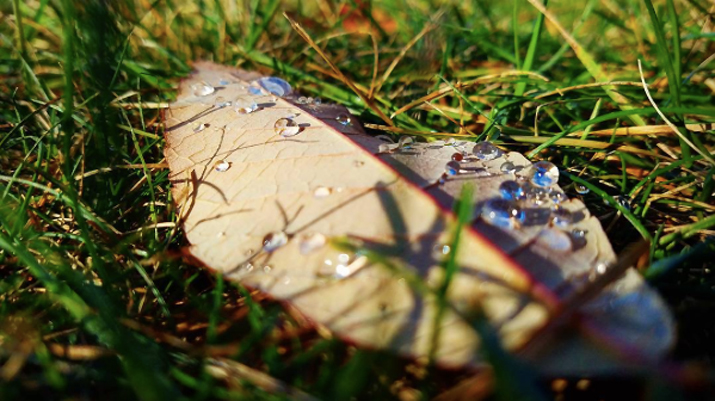 Photo of leaf with rain drops by economagician