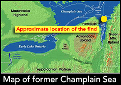 Map showing the location of the seal bones find in a rendering of geography of the former Champlain Sea