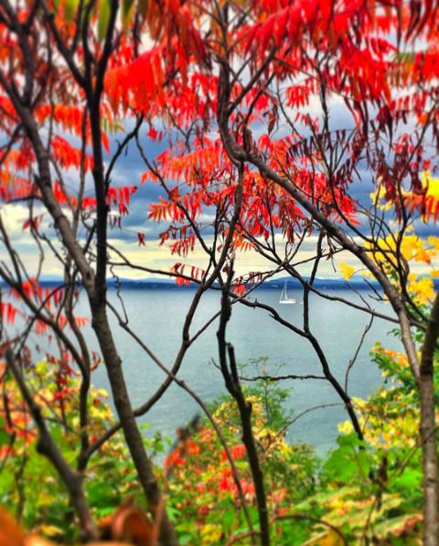 Photo of fall foliage by nickivainauskas