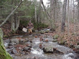 Environmental scientist in Adirondack Mt. stream collecting invertebrates