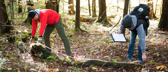 Photo of two students measuring the lenth of a fallen tree limb in the forest