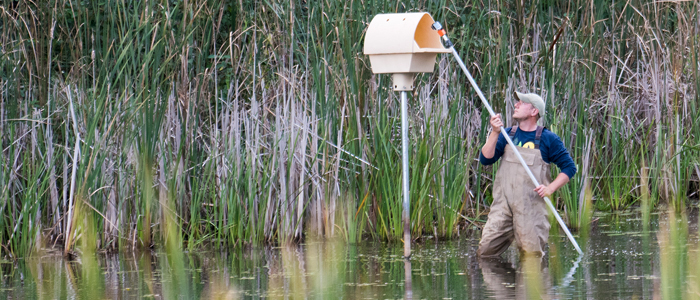 Photo of a student checking on a research station in a pond in the woods