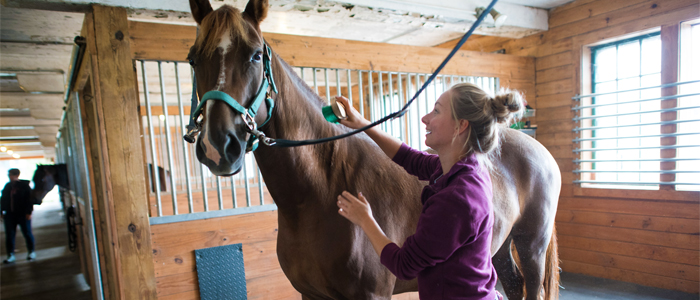 Photo of a student brushing a horse in the horse barn