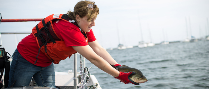 Photo of a student researcher returning a live fish to the lake after measuring it
