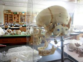 Photo of Osteology and Pathology lab