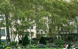 View of SUNY Optometry from Bryant Park