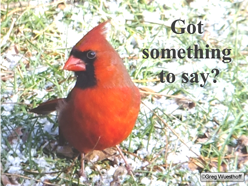 Cardinal Got Something to Say